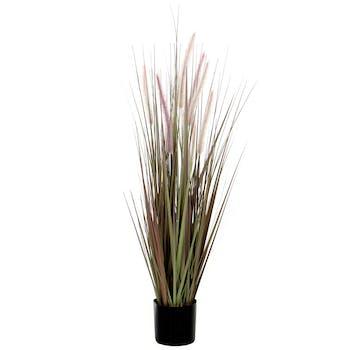 Plante Dogtail en pot H90cm D12,5cm