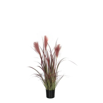 Plante Foxtail en pot PVC bordeaux H81xD45cm