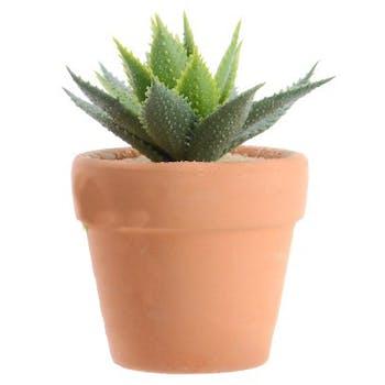 Plante grasse pot terre cuite M3