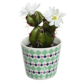 Cactus fleuri fleur blanche en pot décoré