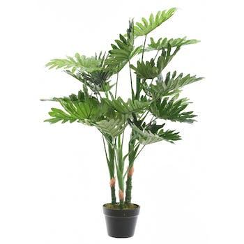 Philodendron en pot H100cm