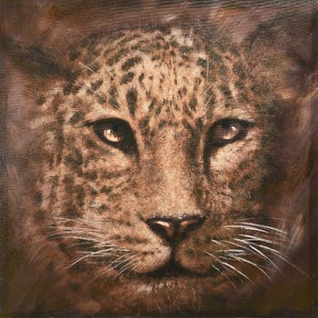 Tableau léopard 80X80cm