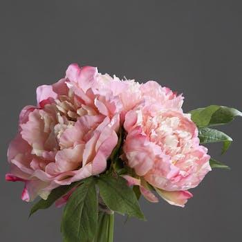 Composition florale bouquet de 3 PIVOINES roses