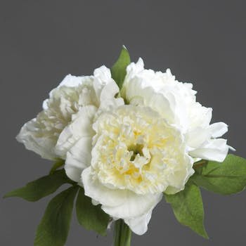 Composition florale bouquet de 3 PIVOINES blanches