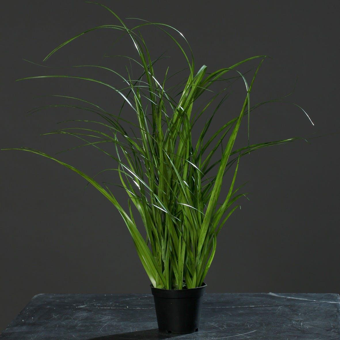 Herbe en pot noir 45CM