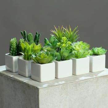 Mini Succulente en pot céramique blanc  7-12CM (à l'unité)