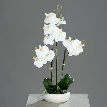 Orchidée Crème 3 tiges en coupe ronde blanche 36CM