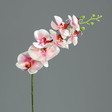 Orchidée Phalaenopsis Rose 7 fleurons 83CM