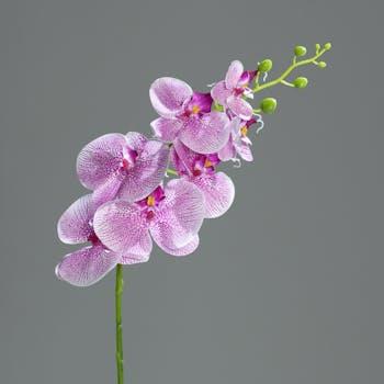 Orchidée Phalaenopsis Pourpre Rose 7 fleurons 83CM