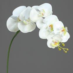 Orchidées Phalaenopsis Crème 6 fleurons 81CM