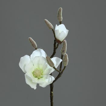 Magnolia couleur Crème 2 fleurs dont 1 bouton 44cm