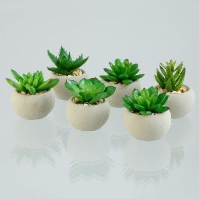 """Succulente """"plante grasse"""" dans son pot rond couleur sable, 6cm (à l'unité)"""