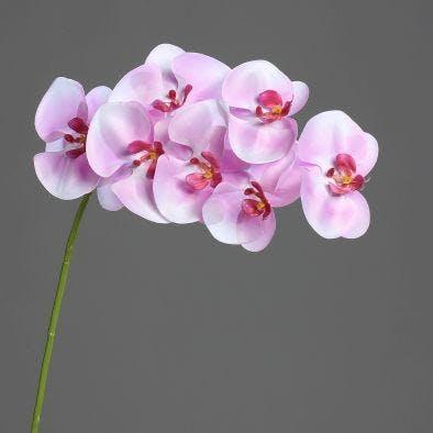 Orchidée-phalaenopsis 7 fleurons couleur lavande, 80cm