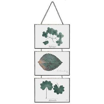 Cadres superposés métal verre herbier