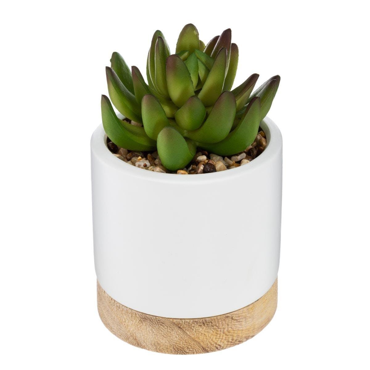 Succulente pot céramique et bois