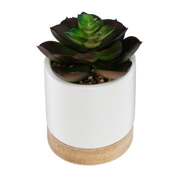 Succulente ouverte pot céramique et bois