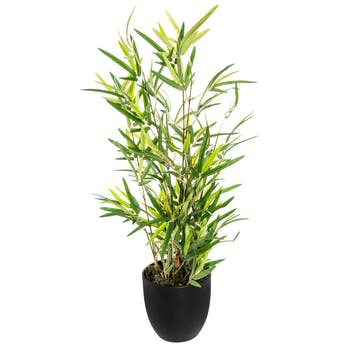 Bambou en pot H60cm