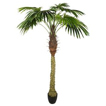 Palmier H180cm