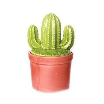 """Cactus déco forme """"T à l'envers"""" dans son pot en terracotta 10,5x10,5x20cm"""