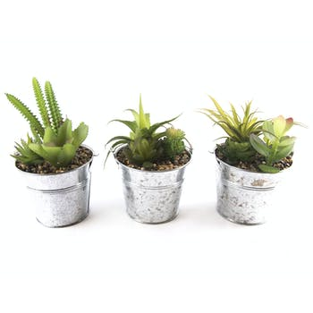 Lot de 3 Succulents en pot en métal H18cm