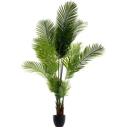 Palmier dans son pot en ciment noir H170cm
