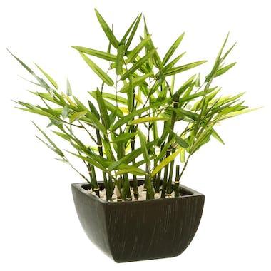 Bambou dans son pot noir 36x36xH35cm