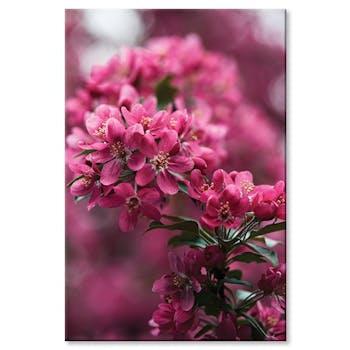 Tableau photo plexiglas fleurs roses