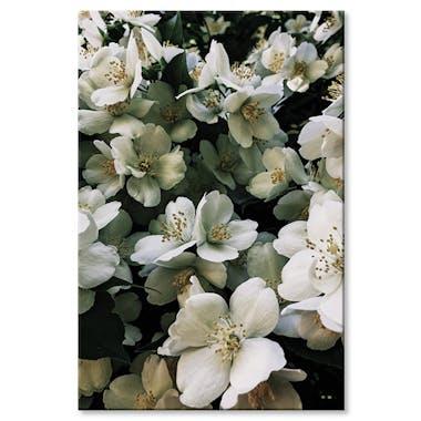 Tableau design bouquet de fleurs blanches aluminium