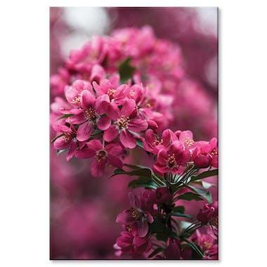 Tableau design fleurs roses aluminium