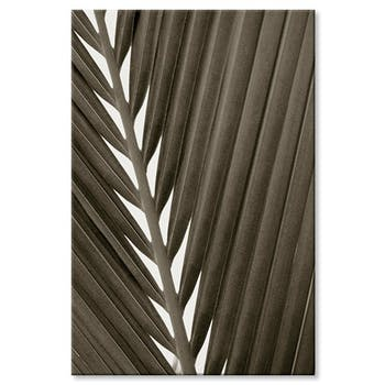 Tableau design feuille palmier visuel 1 aluminium