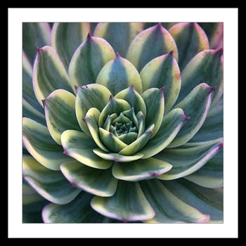 Affiche décorative encadrée plante grasse