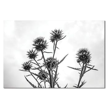 Tableau design chardon noir et blanc aluminium