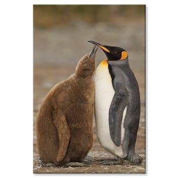 Tableau design duo de pingouins aluminium