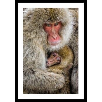 Affiche décorative encadrée singes japonais