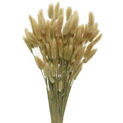 Bouquet de fleurs séchées plumeau 75 cm