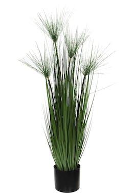 Papyrus en pot H 102 cm