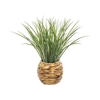 Herbe dans pot en jacinthe tressée