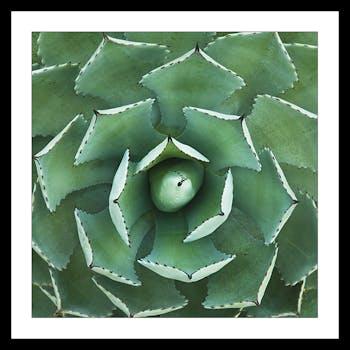 Affiche décorative encadrée cactus