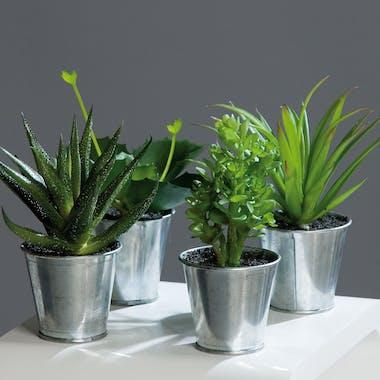 Agave Succulente en pot zinc (à l'unité)