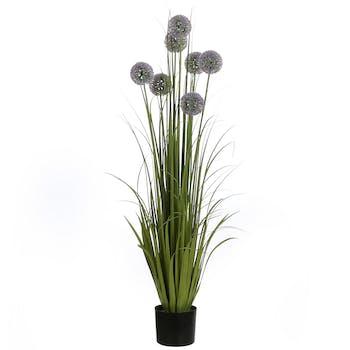 Allium violet en pot 122 cm