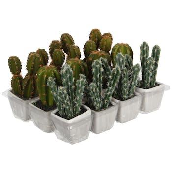 Cactus 3 branches vert orange en pot 14 cm