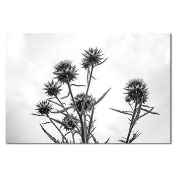 Tableau photo plexiglas chardon noir et blanc