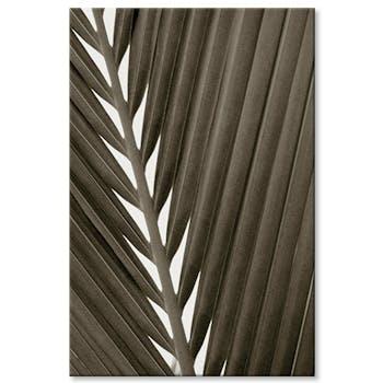 Tableau photo plexiglas feuille palmier visuel 1