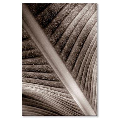 Tableau photo plexiglas feuille palmier visuel 2