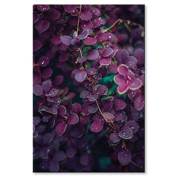 Tableau photo plexiglas rosée du matin